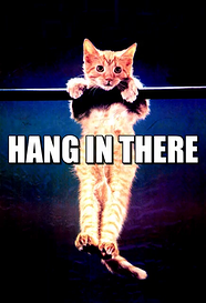 hang in there cat